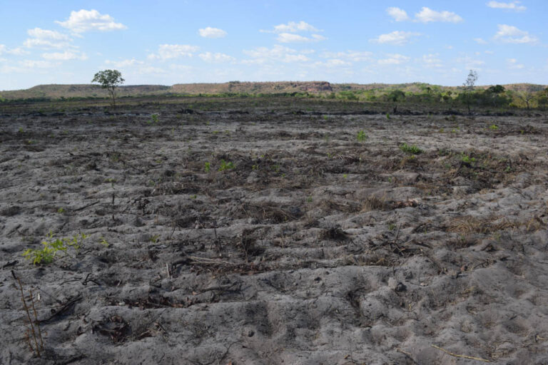 Deforestation by invaders inside the quilombola territory.