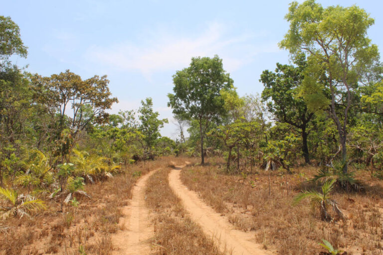 Cerrado vegetation typical of the Tauá region.