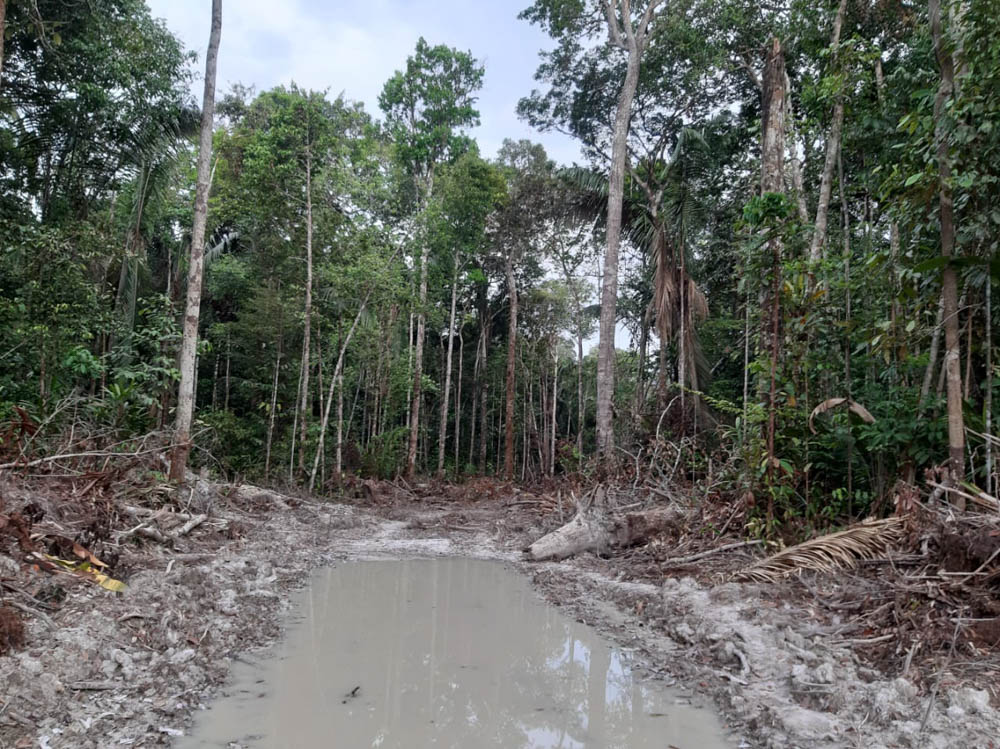 Illegal construction of a side road into the São João Indigenous Land.